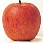 royal-gala-apple